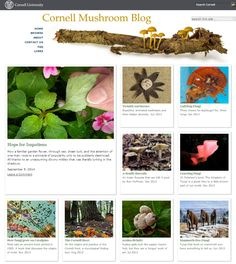 The Cornell Mushroom blog is authored by the Mycology section of Department of Plant Pathology at Cornell University.  Its goal is to provide information for anyone interested in learning more about fungi and contains lots of interesting facts.  It is hosted on Cornell University's CampusPress network ( http://blogs.cornell.edu/ ).