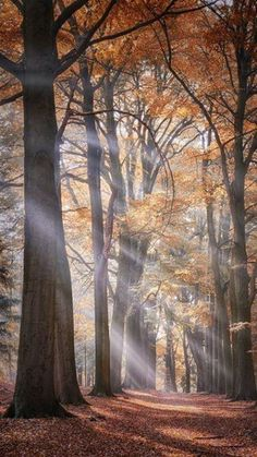Beautiful World, Beautiful Places, Stunningly Beautiful, Landscape Photography, Nature Photography, Tree Forest, Autumn Forest, Forest Light, Autumn Trees