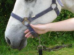 anne coirié, comportementaliste équin, comportement cheval, problème cheval, trouble du comportement cheval, comportement chevaux, communication cheval, comprendre cheval, écoute cheval, éthologue, éthologie, éthologiste, équin, chuchoteur
