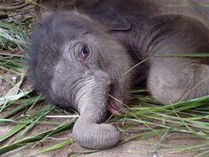 Elephant, Elephant, Elephant Baby