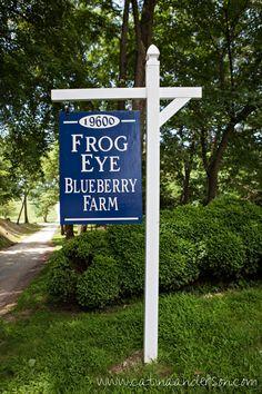 Blueberry Picking at Frog Eye Farm Blueberry Farm, Blueberry Picking, Blueberry Season, Blueberry Recipes, Farm Cottage, Cottage Style, Frog Eye, Flower Poem, Organic Blueberries