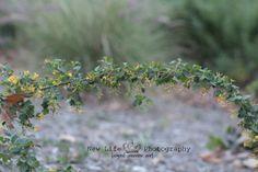 vine, flower, nature, photography