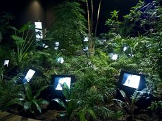 Nam June Paik, Installation view of TV Garden, 1974-2000, video installation with color television stets and live plants, dimensions variable