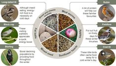 How to help #wildlife http://bbc.in/1mH4gSP  An excellent article explaining what to #feed animals http://www.bbc.co.uk/nature/22309931
