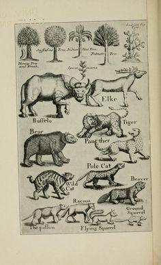 The Natural History of North-Carolina, 1737.