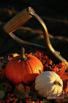 Autumn Pumpkins, Gourds, Antique Shovel, Leaves ...