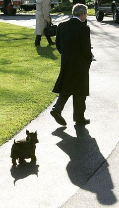 With the sad news of the passing of Barney, George W Bush's terrier turned TV star, we look back at other canine inhabitants of the White House Schnauzer, Animals And Pets, Cute Animals, Raining Cats And Dogs, Dog Houses, Mans Best Friend, Puppy Love, Cute Dogs, Dog Cat