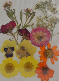 3f54c672528 Uokwiwi™ Real Dried Pressed Flowers - Mixed Pressed Flowers(random Match)  Uokwiwi™