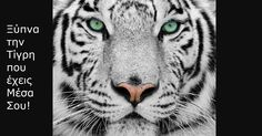 Θα σου πω μια ιστορία παρακίνησης για μια τίγρη. Την τίγρη που έχουμε όλοι μέσα μας! Την τίγρη που έχουμε όλοι αυτή την στιγμή, ανεξαιρέτως. Η τίγρης αυτή έχει απίστευτη δύναμη και μπορεί να κάνει