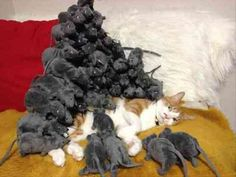 22 Stacking Things On Sleeping Cats Is My Favorite Game