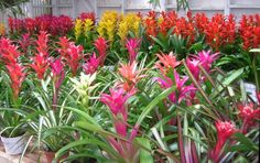 Pictures and names of tropical house plants - House interior