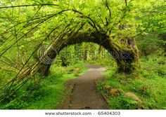 The Hoh Rain Forest, Olympia National Park, Washington, USA I must visit! http://www.nps.gov/olym/planyourvisit/visiting-the-hoh.htm http://www.oprah.com/spirit/Noise-Pollution-Effects-How-Noise-Affects-the-Body-and-Spirit