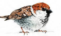 Speed Drawing cute SPARROW - Disegno in time lapse Passero - DRAW cute a...