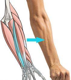 Human Anatomy For Artists, Human Anatomy Drawing, Human Body Anatomy, Anatomy Study, Anatomy Reference, Anatomy Male, Hand Anatomy, Hand Reference, Pose Reference