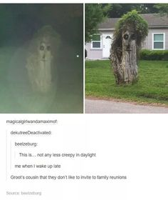 Groot's cousin lol