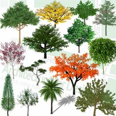 A collection of colorful trees, tropical trees and othe kind of trees as SketchUp 3D models. Free download! Sketchup Model, Playground Design, Landscape Architecture Design, Parking Design, Colorful Trees, Landscaping Plants, Trees And Shrubs, Planting Flowers, 2d