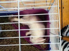 Cute sleeping bunny Sleeping Bunny, Cute, Kawaii