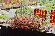 #mitakisou#novarese#vressetrose#wedding #japanese #main table #table #flower #maintable#bridal#三瀧荘# ブレスエットロゼ #ウエディング# 和風 #和装 # メインテーブル#テーブル # 花#テーブルコーディネート#ブライダル#結婚式#ナチュラル#ブレスエットロゼ広島#桜