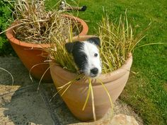 hahaha ... happy in there ha. Plant a Jack Russell Terrier
