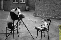 Google Image Result for http://files.myopera.com/farisse/albums/220615/bw,little,boy,panda,photographer,retro,black,and,white-4f2c5489100e2124c26b0442c0a0102c_h.jpg