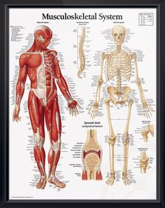 178 best Doctors Anatomy Posters images on Pinterest | Anatomy ...