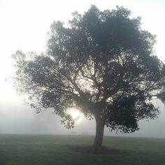 foggy morning san diego
