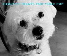 Healthy Treats For Your Pup - Fairfield Residential Healthy Treats, How To Run Longer, Pet Care, Fur Babies, Cute Dogs, Funny Cats, Pup, Blog, Animals