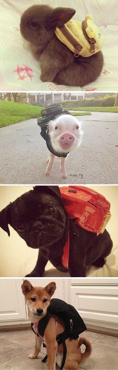 It's these cute animals' first day of school, and they are gonna do GREAT!