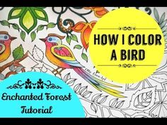 How I color a bird | Enchanted forest