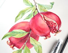 """Check out new work on my @Behance portfolio: """"Watercolor illustrations for Roland"""""""