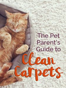 If you share your living space with a pet, chances are you've struggled with how to keep the carpets or rugs fresh and clean. Dog smell permeates rugs, and they're notorious for being a cat's favorite place to barf! Here are some simple tips to keeping your carpets clean if you live with pets: