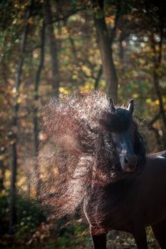Friesian autumn frenzy Photo by Diana Bloemendal — National Geographic Your Shot