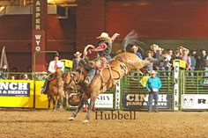 Rusty Wright also came one step closer to accomplishing his goal of having a family member win the saddle bronc riding at the CNFR three years in a row. Wright finished second in the third round with a 77-point effort on Harry Vold Rodeo's Shimmy Valley. He leads the overall standings with 223 . Thanks Susan Kanode and Hubbell Photos
