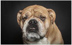 Human Like Dog Portraits by Ralph Hargarten #art #inspiration #photography