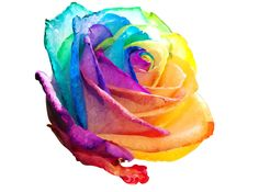 Rainbow Rose by SherbetRainbow on DeviantArt Clay Flowers, Flowers Nature, Beautiful Flowers, Beautiful Things, Rainbow Roses, Rainbow Colors, Tie Dye Roses, Multicolor Wedding, Coral Roses
