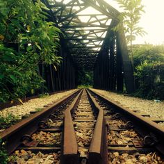 Railway tracks along Bukit Timah Rd