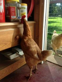Lois checking out the Happy Hen treats