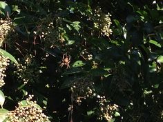 I almost walked into this monster's web: it's HUGE