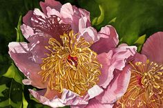"""Jane Freeman ~ Summer Shadows ~  """"I have grown this peony in my garden for several years and I really love how it's petals are like thin paper and light passes through them.  The texture of that wonderful center is also so attractive to my eye as it adds interest to the entire painting."""""""