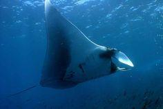 baltra island - Google Search Galapagos Islands Ecuador, Theory Of Evolution, Animal Species, Archipelago, Pacific Ocean, Fighter Jets, Wildlife, Coast, Google Search
