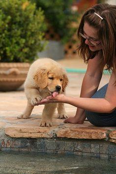 Pourquoi les chiens nous lèchent-ils ?