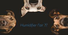 Confort thermique : zoom sur l'humidificateur d'air  http://www.blogdomotelec.fr/general/confort-thermique-zoom-sur-lhumidificateur-dair/