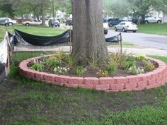 Raised flower beds around trees. This is what I am doing to the four trees in my front yard this summer.