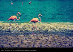 Foto 'Flamingobay' von 'birdys'