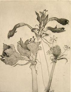 Hydrangea sketch by Katie DeGroot