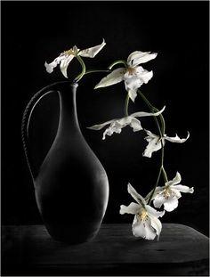ɛïɜ ✿ flowers ✿ ɛïɜ . . .