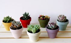 Collection of 7 MINI Painted Clay Pot Succulents (Orange, Red, Olive, Blue, Pink, White, Purple) - Perfect gift for everyone