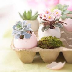 For Easter decor, why not make egg planters? After Easter, the plants — eggshells and all — can be planted in soil.