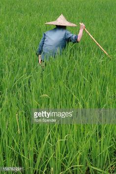Stock Photo : Peasant farmer by Yulong River