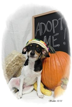 Found on Burlingame Road. Available on 10/22/13 if not claimed.If interested in adopting a pet you will need to fill out a request to adopt. This needs to be on file overnight before you are able to adopt. The adoption fee is $20 and there is a...